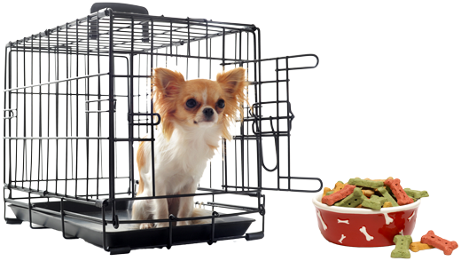 Dog in Training Crate