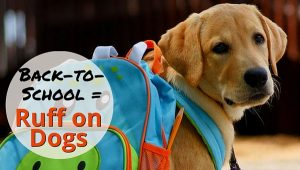 Back to school ruff on dogs
