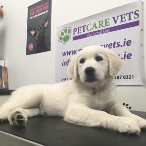 Puppy in for check up