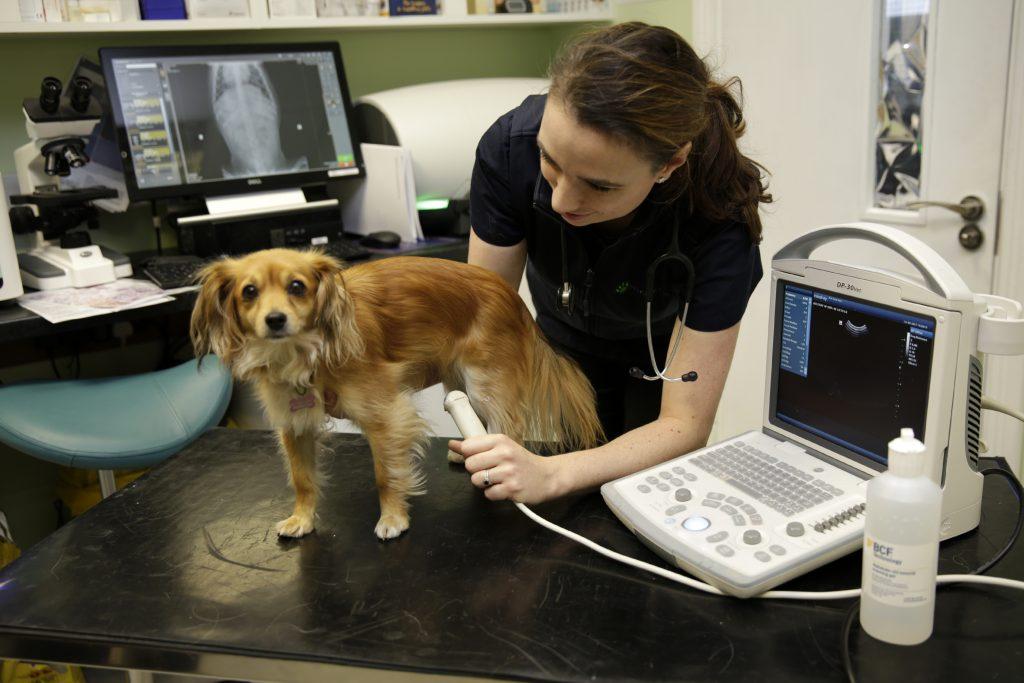 Ultrasound on dog