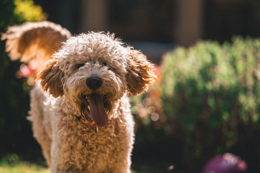 Healthy vaccinated dog